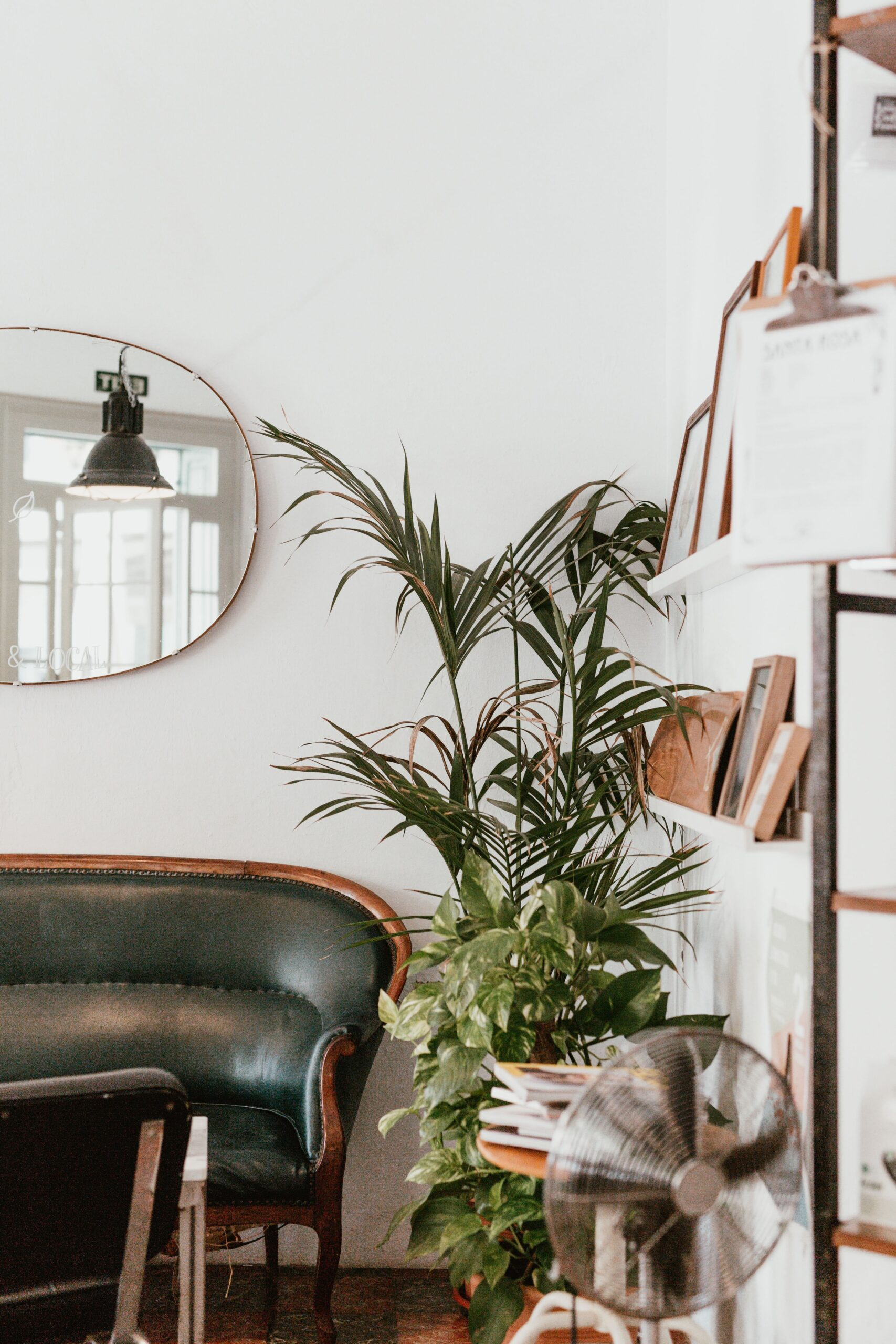 Cozy living space with a vintage leather couch and plants